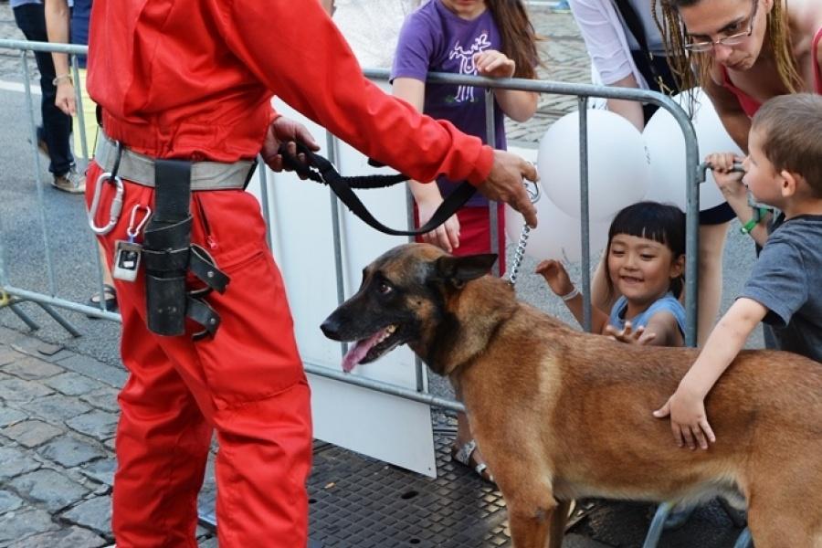de honden van de Civiele Bescherming laten zich gewillig aaien door het publiek